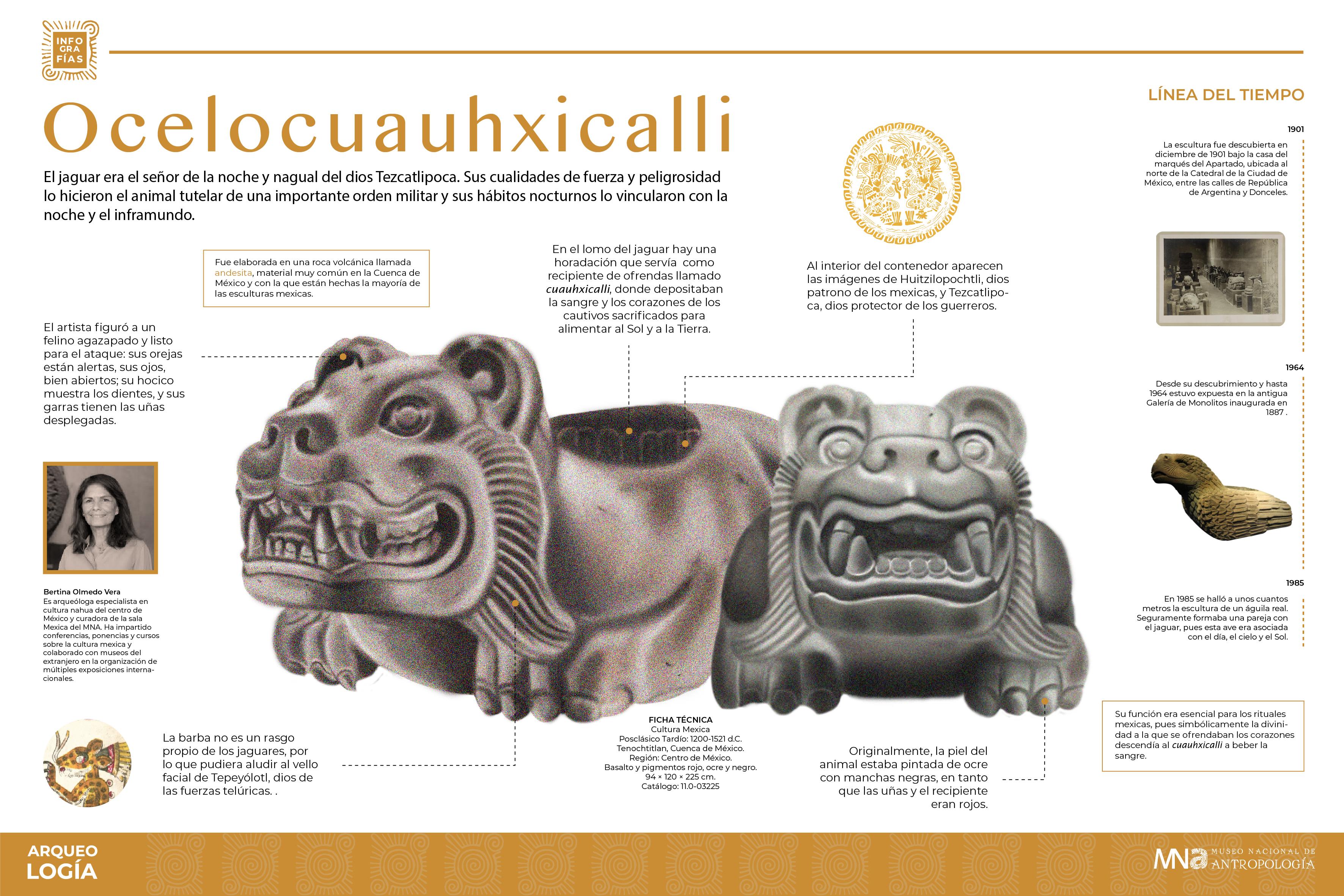 Infografía Ocelocuauhxicali-01.jpg